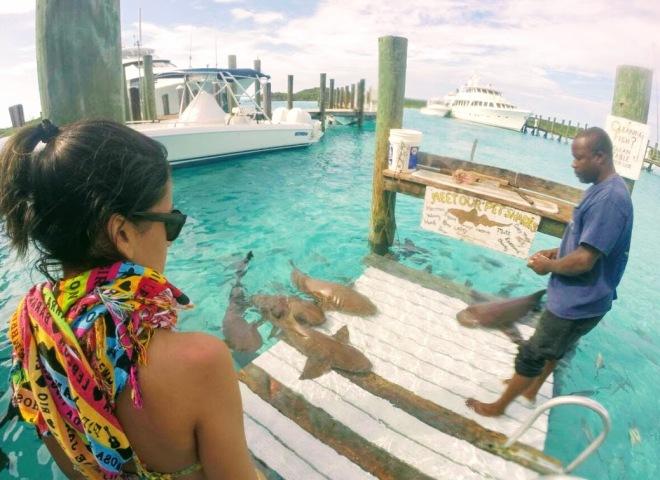 me feeding sharks