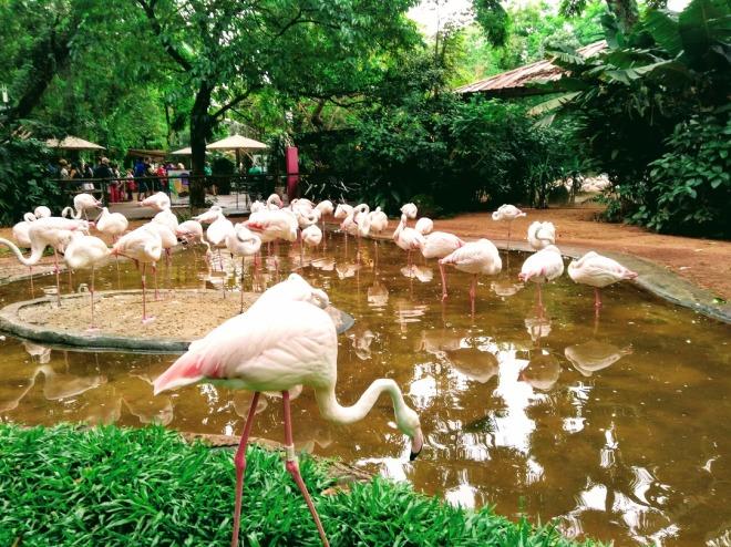 parque das aves.jpg