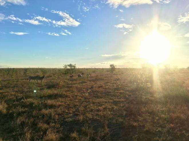 safari aberto